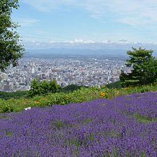 幌見峠ラベンダー(景色あり)lavender_city
